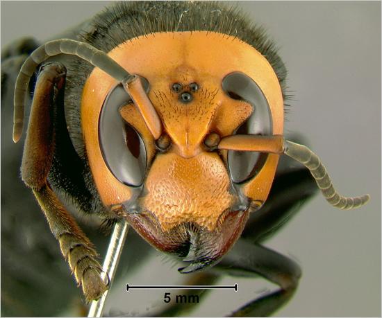 The Weirdness of NATURE Hornet1